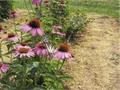 I fiori dell'Orto Botanico